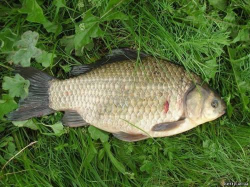 продажа живца для рыбалки в череповце